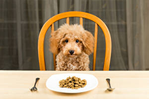 Images Dogs Poodle Plate Spoon Fork Animals