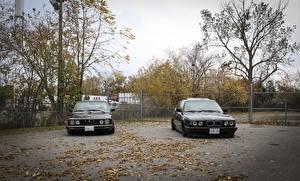 Desktop wallpapers BMW Autumn Two Trees E28 E34 stance Cars