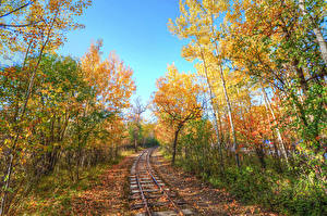 Images Railroads Autumn Forests Trees Nature