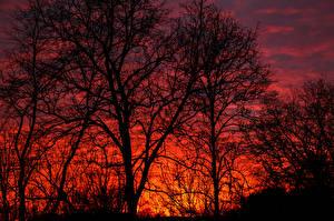 Bilder Sonnenaufgänge und Sonnenuntergänge Bäume Ast Natur