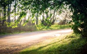 Fotos Straße Wälder Gras Ast Blatt Natur