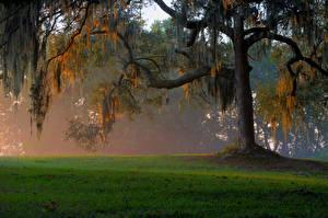 Bilder Bäume Gras Ast Natur