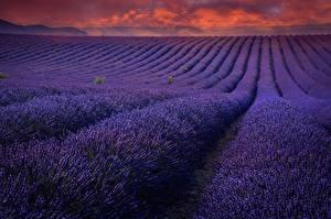 Hintergrundbilder Lavendel Morgendämmerung und Sonnenuntergang Acker Violett Natur