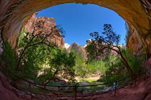 Bilder Park Vereinigte Staaten Zion-Nationalpark Felsen Bäume