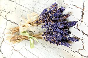 Fotos Lavendel Großansicht Sträuße Blüte