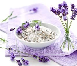 Fotos Lavendel Hautnah Teller Blüte