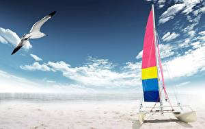 Wallpaper Sailing Boats Sky Gull Clouds Sand Nature
