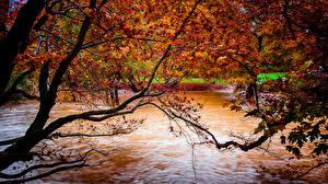 Hintergrundbilder Herbst Wasser Flusse Bäume Blattwerk Ast Natur