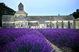 Fotos Frankreich Tempel Lavendel Felder Natur