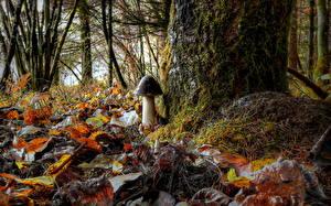 Bilder Pilze Natur Herbst Wälder Hautnah Blattwerk Laubmoose HDRI
