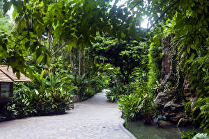 Picture Singapore Parks Trees Nature