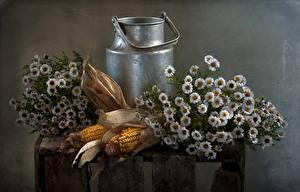 Photo Corn Camomiles Still-life Food Flowers