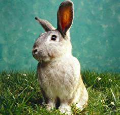 Фотографии Кролики Трава Животные