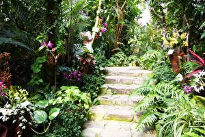 壁纸、、庭園、日本、ラン科、階段、低木、Fukuoka Botanical Garden、自然