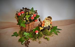 Hintergrundbilder Pilze Natur Weidenkorb Laubmoose Blattwerk