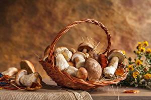 Fotos Pilze Weidenkorb Lebensmittel