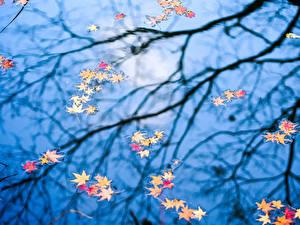Fotos Herbst Wasser Blattwerk Ast Natur
