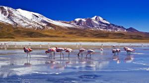Fotos Flamingos Gebirge See Vögel