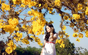 Bilder Blühende Bäume Brünette Kleid Ast Gelb junge frau