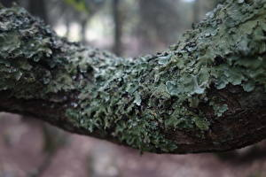 Pictures Closeup Moss Trunk tree Nature
