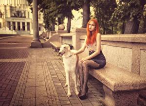 Fotos Hunde Windhund Rotschopf Bank (Möbel) Stadtstraße Sitzend junge frau Tiere