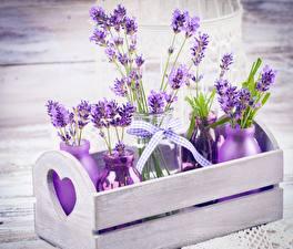 Fotos Lavendel Nahaufnahme Violett Weckglas Blüte