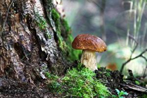 Fotos Pilze Natur Hautnah Laubmoose Natur