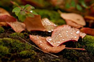 Pictures Closeup Autumn Leaf Drops Moss Nature