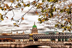 Fotos Irland Brücken Herbst Dublin Ast Blatt Städte