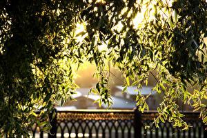 Bilder Blatt Lichtstrahl Ast Natur