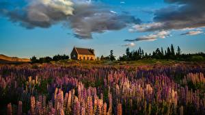 Pictures Building Grasslands Sky Lupinus Clouds Nature