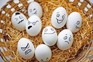 Bilder Ostern Hautnah Ei Weidenkorb das Essen Humor