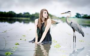 Fotos Reiher See Vogel Wasser Braunhaarige Mädchens