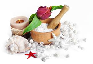 Wallpapers Tulip Shells Candles Starfish Closeup Spa Mortar and pestle Flowers
