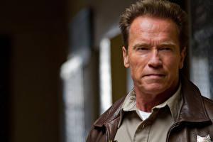 Bureaubladachtergronden Arnold Schwarzenegger Een man Gelaat Kijkt Ray Owens, The Last Stand film Beroemdheden