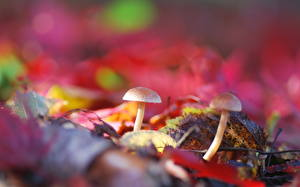 Bilder Pilze Natur Nahaufnahme Blattwerk