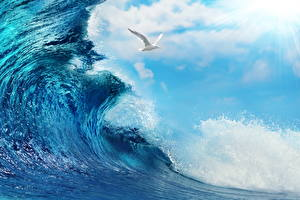 Images Sea Seagulls Waves Sky Clouds Nature Animals