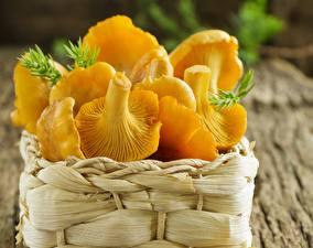Bilder Pilze Natur Großansicht Weidenkorb Chanterelle