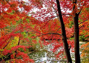 Fotos Herbst Wälder Bäume Ast Natur