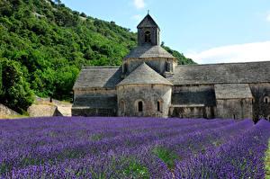 Hintergrundbilder Lavendel Tempel Natur