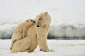 Image Bears Polar bears Cubs 2 animal