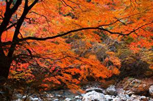 Bilder Herbst Flusse Steine Bäume Ast Natur