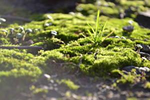 Photo Closeup Grass Moss Nature