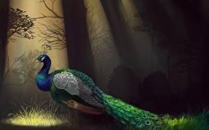 Bilder Gezeichnet Pfau Vögel Lichtstrahl ein Tier