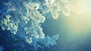 Fotos Jahreszeiten Winter Schnee Ast Natur