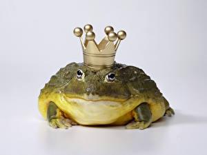 Fotos Frosche Schmuck Nahaufnahme Ein Tier Tiere