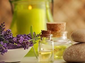Fotos Lavendel Spa Blüte