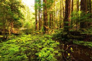 Fotos Wälder Bäume Sumpf Laubmoose Natur