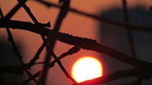 Fotos Sonnenaufgänge und Sonnenuntergänge Sonne Ast Natur