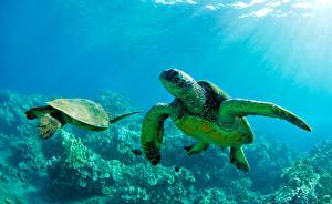 Photo Underwater world Turtles Rays of light 2 animal